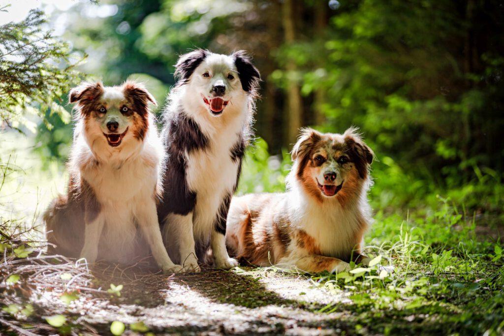 Drei Hunde sitzen im Wald