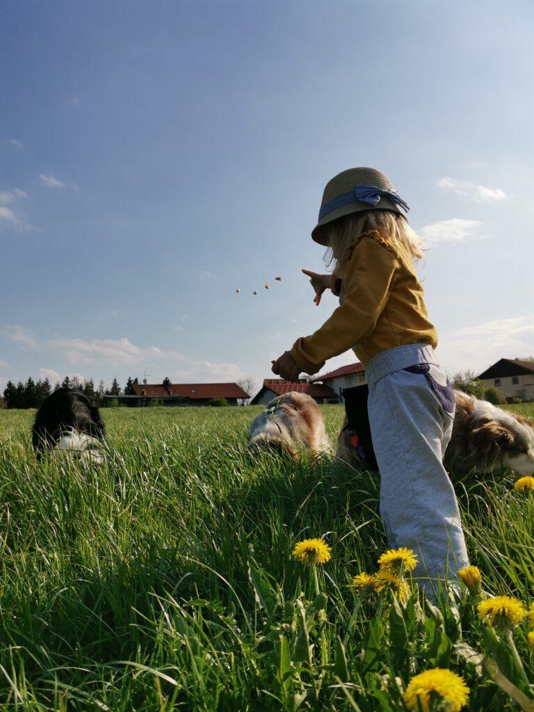 Kind wirft Leckerli für Hunde