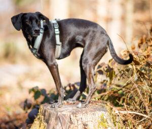 schwarzer Hund steht auf Baumstamm
