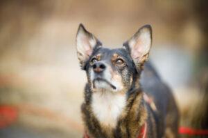 Hund wartet auf Leckerli
