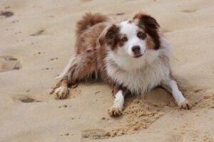 Hund liegt auf dem Sandstrand