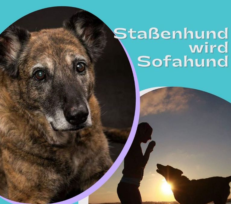 Teaserbild_Podcast_Strassenhund