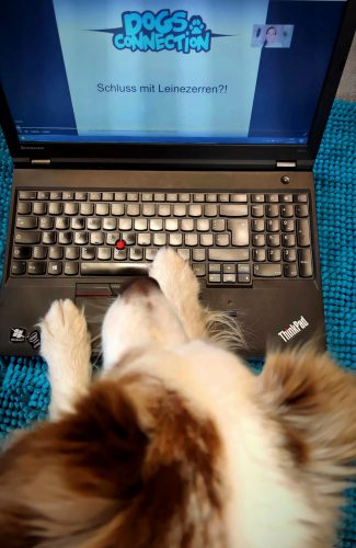 Hund tippt am Laptop